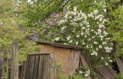 Filialen av lilan på den therural gatan kan in Fotografering för Bildbyråer