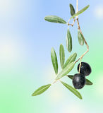 filialen bär fruktt olivgrön arkivfoton