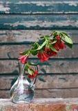 filialen blommar den glass fjädervasen Royaltyfria Bilder