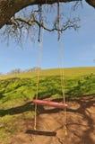 filialen hänger den röda swingtreen för den stora oaken royaltyfria foton