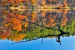 Filialen sticker fram från Autumn Lake Royaltyfri Foto