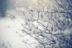 Filialer av buskar i insnöat vintern i molnigt väder royaltyfri bild