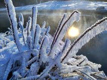 Filialer av buskar i rimfrost, som, om caramelized royaltyfria foton