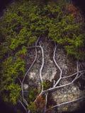 Filialer av busken Royaltyfri Foto