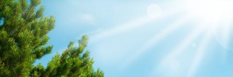 Filialer av cederträ mot himlen Arkivbild