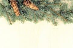 Filialer av den blåa granen och kottar på en träbakgrund fotografering för bildbyråer