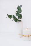 Filialer av den gröna silverdollareukalyptuns i den keramiska vasen, brännande stearinljus på vit bakgrund, utformad bild Royaltyfri Fotografi