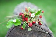 Filialer av den nya lösa lösa jordgubben på gammalt trä av en journal Arkivfoto