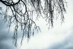 Filialer av det avlövade kala trädet arkivbilder