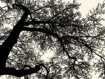 Filialer av det lövfällande trädet i den kalla säsongen stock illustrationer