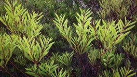 Filialer av en buske, busksnår arkivbild