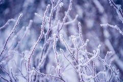 Filialer av en buske som täckas med rimfrostslut upp arkivbild