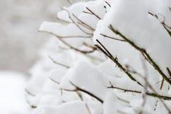 Filialer av en buske som täckas med tungt insnöat staden arkivfoton