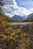 Filialer av en gul lärk mot bakgrunden av ett berglandskap arkivfoto