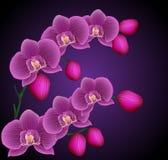 Filialer av en orkidé Arkivfoton