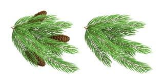 Filialer av ett grönt träd för jul med kottar som isoleras på vit bakgrund festligt element timmar liggandesäsongvinter vektor royaltyfria foton