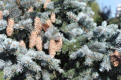 Filialer av ett träd för nytt år royaltyfri fotografi