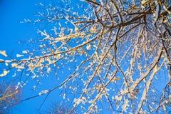 Filialer av ett träd i solljus mot himlen Arkivfoto