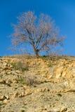 filialer av ett träd mot blå himmel Royaltyfri Fotografi