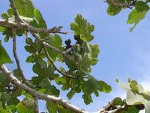 filialer av ett träd och himlen fotografering för bildbyråer