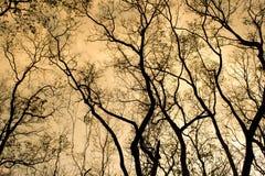 Filialer av ett träd utan sidor i vår på orange himmel Arkivfoton
