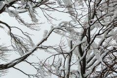 Filialer av etttäckt iskallt träd Fotografering för Bildbyråer