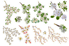 Filialer av fruktträd Royaltyfria Bilder
