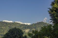 Filialer av gröna träd mot de skogsbevuxna lutningarna av bergen och de snöig maxima av Annapurna under en klar blå himmel royaltyfri foto