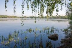 Filialer av hängbjörkträd som hänger över vattnet Sjön på gryning Arkivfoton