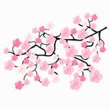 Filialer av japanska körsbärsröda blomningar också vektor för coreldrawillustration Fotografering för Bildbyråer