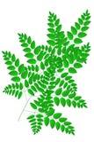 Filialer av Leaves 2 vektor illustrationer