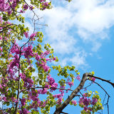 Filialer av lila blommor royaltyfri fotografi