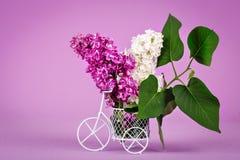 Filialer av lilor i en dekorativ korg på purpurfärgad bakgrund Fotografering för Bildbyråer