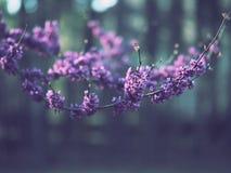 Filialer av purpurfärgade blommor royaltyfri fotografi
