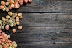 Filialer av rosa druvor arkivfoton