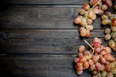 Filialer av rosa druvor arkivbild