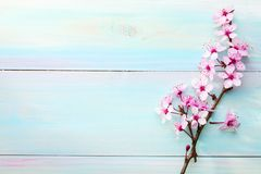 Filialer av Sakura på trätabellen tonad bild arkivfoton