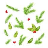 Filialer av sidor för granträd och järnek Royaltyfria Bilder