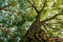Filialer av träd i sikten underifrån royaltyfria foton