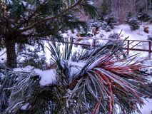 Filialer av träd och buskar i rimfrost arkivfoton