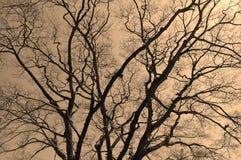 Filialer av träd på grå bakgrund royaltyfria bilder