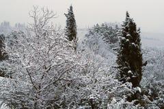 Filialer av träd som täckas av insnöat de Tuscan kullarna efter ett vintersnöfall fotografering för bildbyråer