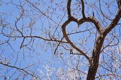 Filialer av trädet med hjärta-format Royaltyfri Bild