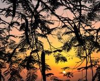 Filialer av trädet och himmel, Royaltyfri Fotografi