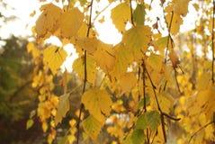 Filialer av trädet och sidor royaltyfri fotografi