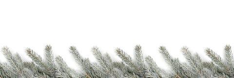 Filialer för trädet för julgarneringgran snöar vinter som isoleras på w arkivbild