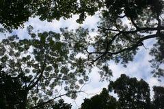 Filialer från lägre vinkel av ett stort gammalt träd Arkivbilder