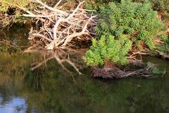 Filialer i den Strymonas floden, Serres Grekland Hösten landskap royaltyfria foton