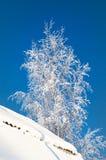 Filialer i frostig vinter snow utomhus- Arkivbilder