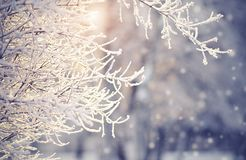 Filialer i rimfrost och insnöat vintern Royaltyfri Foto